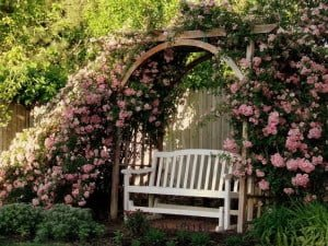Outdoor Living - Seating Under Rose Covered Trellis