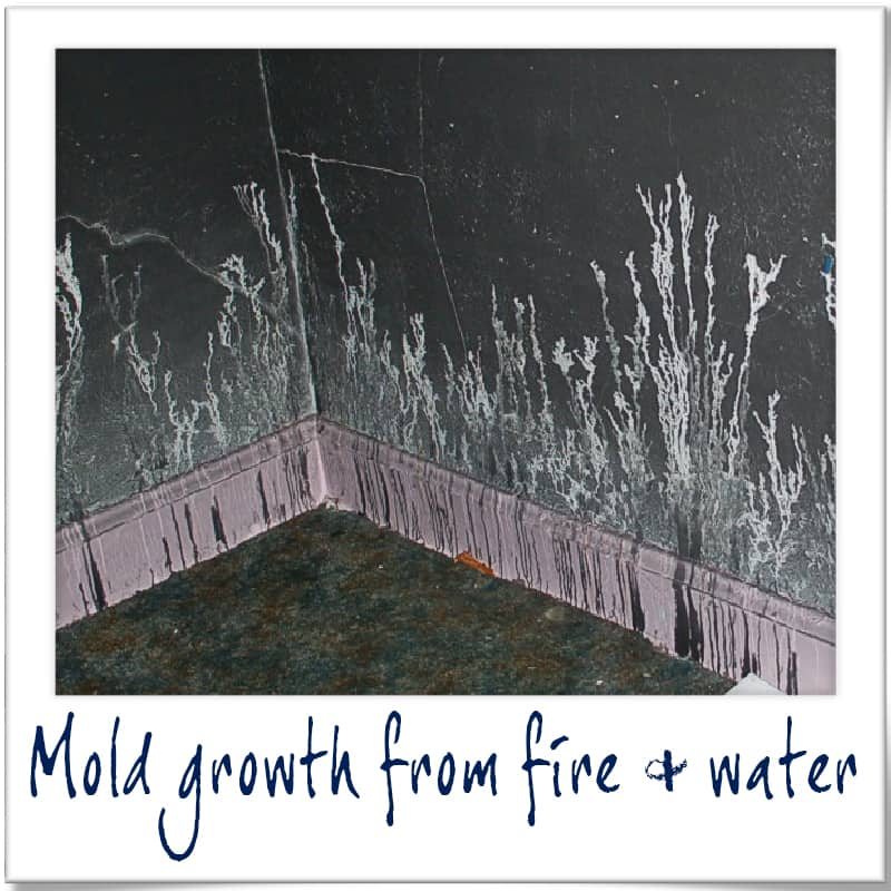 Mold growth from fire and water can be repaired by 3Rs Construction