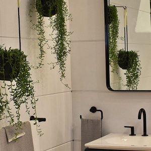 Living Plants in Bathroom 3Rs Construction