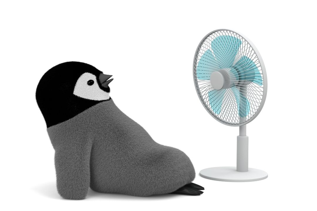 Use Fans - Protect Pets in the Heat