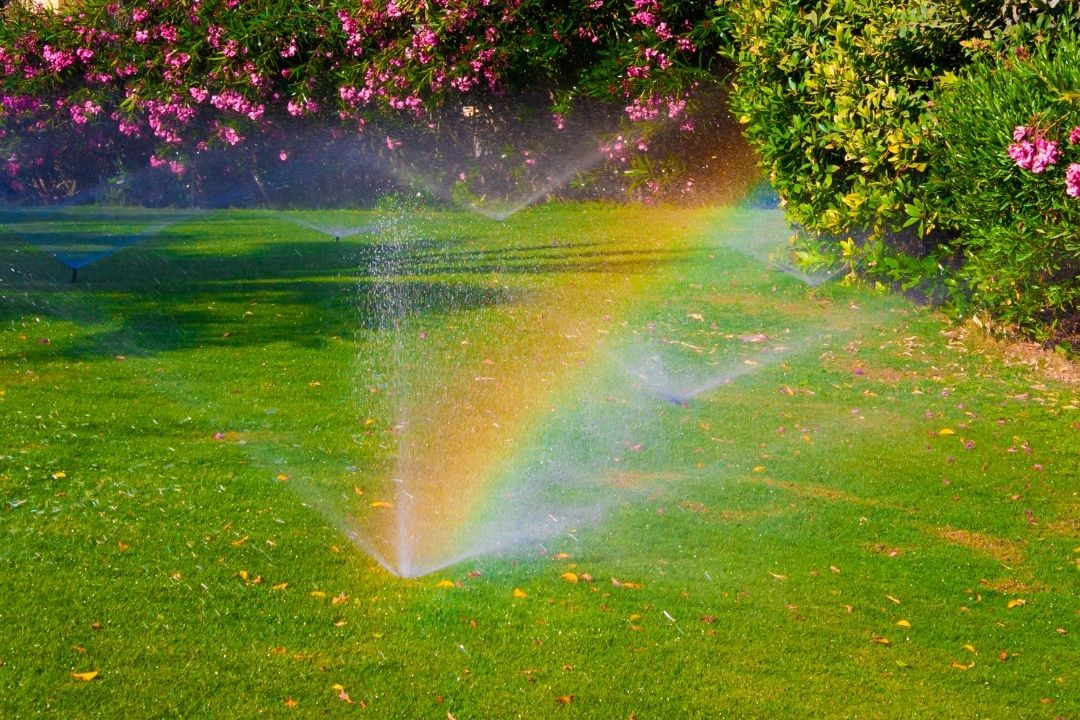 Water Plants Early to Protect from Heat